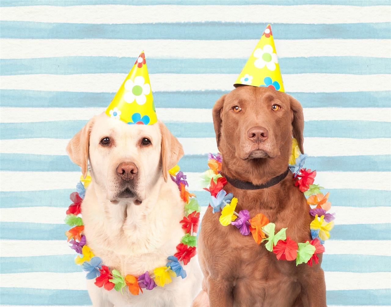Dogorama Hundsporthall firar 7år!
